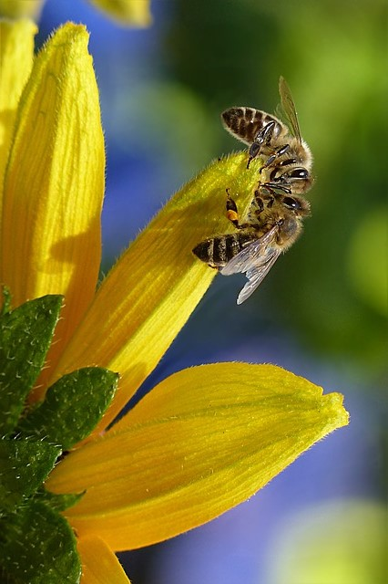BEE WALK DETROIT, Sat Jul 20 2019 at 11:00 am to noon